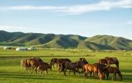 モンゴルの草原風景-後ろの白い建物はモンゴルの伝統的移動家屋-ゲル-ゲルはテントと同様組み立て式で-移動のたびに畳まれ-組み立てられる-ゲルと関連の文化